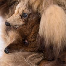 宮川慶子/Keiko Miyagawa《Someday》2016, real fur