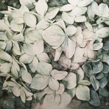 倉崎稜希/Ryoki Kurasaki《hydrangea》 2017, 53x53cm, water color on paper